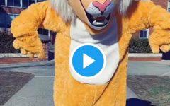 Willy the Wildcat: Newest TikTok Star