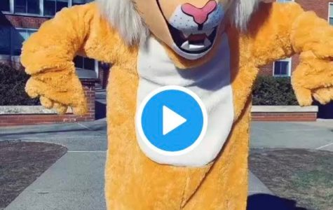 Willy the Wildcat: Newest TikTok Star